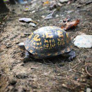 Foehammer - Shadow Woods Metal Fest - Turtle